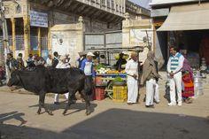 2014-01-16-mandawa-streets-india-0014 by miguelandujar, via Flickr