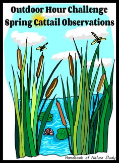 Outdoor Hour Challenge Spring Cattail Observations with watercolor suggestions @handbookofnaturestudy