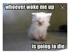 Baby Animals Being Grumpy Old Men Funny cats. For more funny cat quotes visit /lol-funny-cat-pic/Funny cats. For more funny cat quotes visit /lol-funny-cat-pic/ Cute Funny Animals, Funny Animal Pictures, Cute Baby Animals, Animal Pics, Funny Photos, Sports Pictures, Funny Animal Quotes, Angry Quotes Funny, Funny Saturday Quotes
