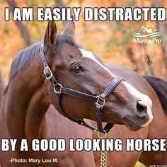 I get easily distracted just by a horse, because all of then are beautiful ❤❤❤ Funny Horse Memes, Funny Horse Pictures, Funny Horses, Cute Horses, Horse Photos, Pretty Horses, Horse Love, Beautiful Horses, Horse Humor