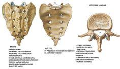 ESTUDOS ÁREA DA SAÚDE - Sara Dall'Alba: Coluna vertebral