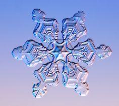 Real snowflake...beautiful