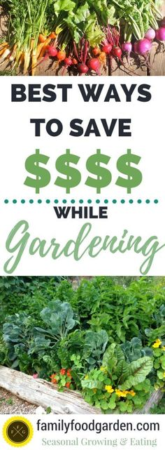 The best frugal gardening tips