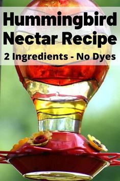 Hummingbird Nectar Recipe, so easy to make your own hummingbird food without the dye, using water and sugar, two ingredients we all have in our homes. Attract hundreds of hummingbirds to your garden this year with this nectar recipe. Homemade Hummingbird Nectar, Homemade Hummingbird Food, Hummingbird Cake Recipes, Hummingbird Garden, Hummingbird Sugar Water, Hummingbird Feeder Recipe, Hummingbird Drawing, Watercolor Hummingbird, Hummingbird Tattoo