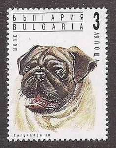 Dog Art Head Study Portrait Postage Stamp PUG MOPS CARLINO Bulgaria 1991 MNH