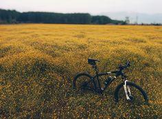 3200x2368 Wallpaper field, meadow, grass, bicycle, flowers