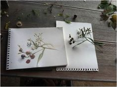 Watercolor and nature study instruction, with some Charlotte Mason thrown in.
