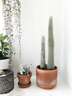 Emily Netz: My Favorite Houseplants & Their Care