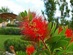 my garden,20/08/2015 Edging Plants, Fruit Trees, Hedges, Shrubs, Countryside, Farmhouse, Garden, Beautiful, Garten