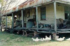 Old Farm House with Ducks .    Clarence River .  And Everything else by the look of the verandah ! Photo late 1980,s