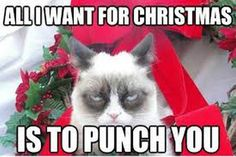 Funny Christmas Memes Hilarious Grumpy Cat Ideas For 2019 Funny Merry Christmas Memes, Funny Christmas Captions, Grumpy Cat Christmas, Funny Christmas Pictures, Christmas Humor, Funny Pictures, Christmas Images, Christmas Sayings, Funny Pics