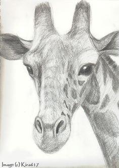 drawing giraffes | realistic sketch of a giraffe drawn a couple years ago.