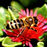 Τι πρέπει να κάνεις αν σε τσιμπήσει σφήκα; Insects, Posts, Messages