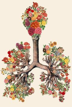 Anatomy of the human body, mixed with flowers, and other elements of nature by artist Bedelgeuse