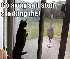 Funny animals of the week - 16 January 2015 pics) Funny Animal Memes, Cute Funny Animals, Animal Quotes, Cat Memes, Funny Cute, Cute Cats, Animal Humor, Cats Humor, Funny Kitties