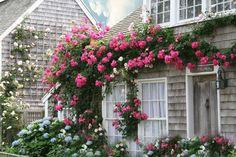 Photo Print   Shabby Rose Cottage by CapeCodPhoto on Etsy, $15.00
