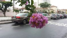 Canal 3 - Santos - Brasil - 26/10/2014