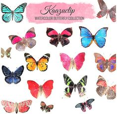 Watercolor Butterfly Collection  Commercial and by kaazuclip