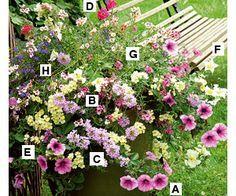 Planter et semer les plantes en pots ou au jardin en avril - mai - Grande Potée pastel : surfinias, verveines et némésias