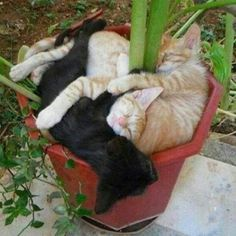 Cats in a plant pot
