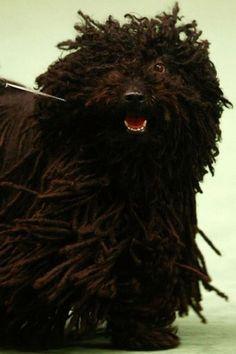 Hilarious Dog Haircuts