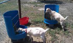 goat feeders ile ilgili görsel sonucu