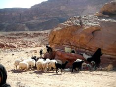 #Sinai desert #Dahab #Nuweiba #bedouin culture #nomad #safari #travel sand stone