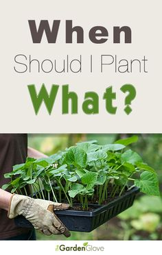 When Should I Plant What? • Lots of tips, info and planting calendars!