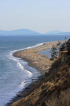 Dungeness Spit, the largest natural spit in the USA, and while there enjoy some bird watching.