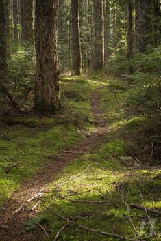 ideas for nature trees photography pathways Path Design, Forest Path, Tree Photography, Newborn Photography, Nature Tree, Flowers Nature, Walk In The Woods, Pathways, Beautiful Landscapes
