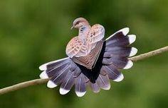 This birdie be in love