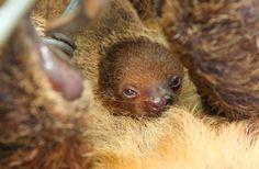 And some inspirational photographs... | Finally, A Chance To Name A BabySloth