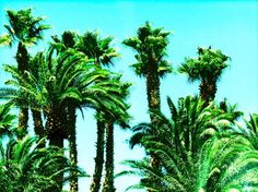 """Green Palm Trees"" (2014) by Dietmar Scherf #art #vacation #island #interiordesign"