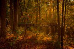 A bridge in the woods at Paris Mountain, South Carolina