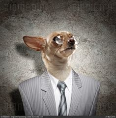 Funny portrait of a dog in a suit - stock photo