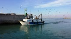 barca e gabbiani boat and seagulls