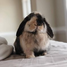 8 Things You Do That Upsets Your Bunny! 8 Rabbit is a is very popular in and out of the house rabbit and is the first one in the world of your pet supplies for your baby bunny and the best treats and toys Cute Baby Bunnies, Cute Babies, Bunny Bunny, Bunny Rabbits, Cute Little Animals, Cute Funny Animals, Beautiful Rabbit, Bunny Care, House Rabbit