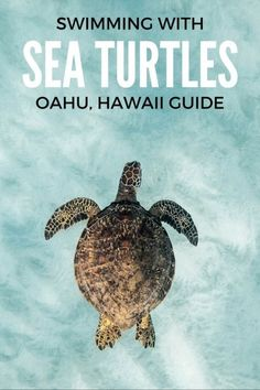 The ultimate guide to help you swim with Sea Turtles on Oahu, Hawaii. Where to find them, what to do and what not to do! We have you covered. oahu hawaii travel tips for beach vacation ideas Kauai, Oahu Hawaii, Mahalo Hawaii, Visit Hawaii, Hawaii Honeymoon, Hawaii Life, Waikiki Beach, Hawaii 2017, Honolulu Oahu