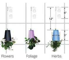 Plant Hanger + Self Watering Pot + Fiber Soil = Stylish Indoor Hanging Planter on Your Window. Create a Vertical Upside Down Herb or Flower Garden with the Bottoms Up Kit. It's Easy and a Great Gift.