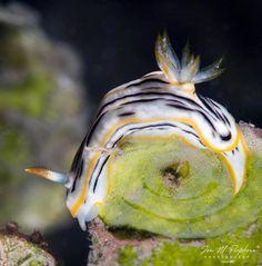 Fiji Islands, Sea Slug, Under The Sea, Spinning, Fun Facts, Household, Coast, Doodles, Around The Worlds