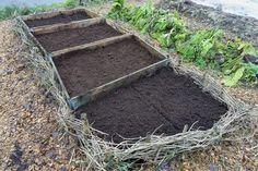 Container Gardening, Gardening Tips, Bokashi, Plants, Hobbies, Inspiration, Garden, Backyard Farming, Compost