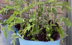 One pot, ten crops: how to grow food in one container all year round - Telegraph