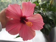 mein pinker Blumenmoment