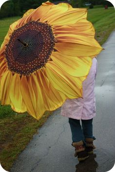 sunflower on rainy days