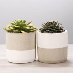 Concrete Succulent Planter / WHITE / 2 colorways / 2 sizes / Cement Cylinder Cactus Pot Pencil Cup I