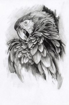 55 Animals With Wings Pencil Drawing Ideas - Art Pencil Drawings Of Animals, Animal Sketches, Bird Drawings, Draw Animals, Amazing Drawings, Cool Drawings, Drawing Sketches, Beautiful Drawings, Drawing Art