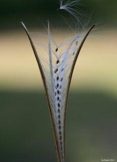 Seedhead / Su Reed