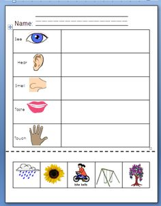 math worksheet : my five senses activities free five senses printables  senses  : Five Senses Worksheets For Kindergarten