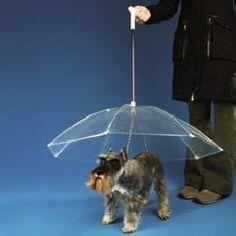 doggie unbrella - Fifi must have one