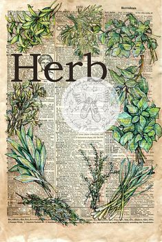 PRINT: Herb Mixed Media Drawing on Antique Dictionary Page available for purchase at www.etsy.com/shop/flyingshoes